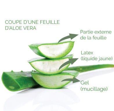Aloe Vera La Baule Guérande Pornichet Saint Nazaire